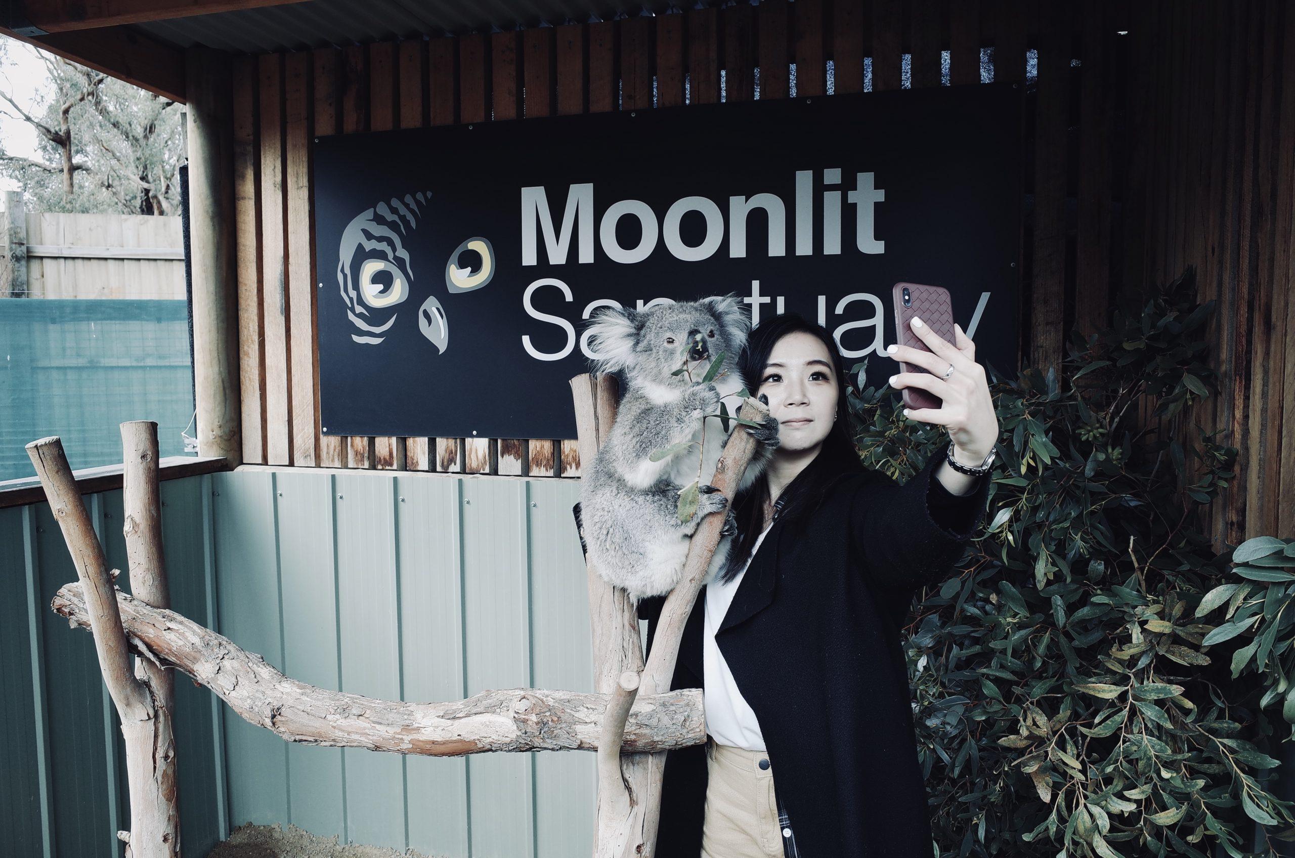 澳洲墨爾本|月光保護區野生動物保育公園 與無尾熊和袋鼠的親密接觸